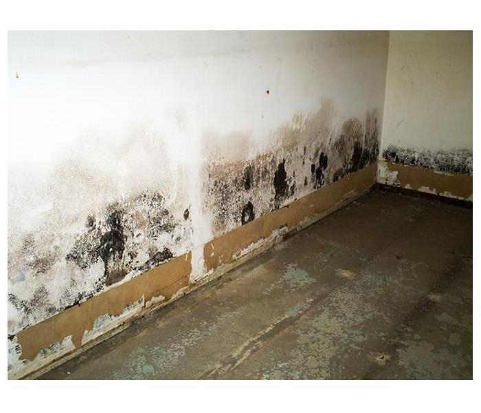 A white wall with brown coloring of water damage and large spots of black colored mold.