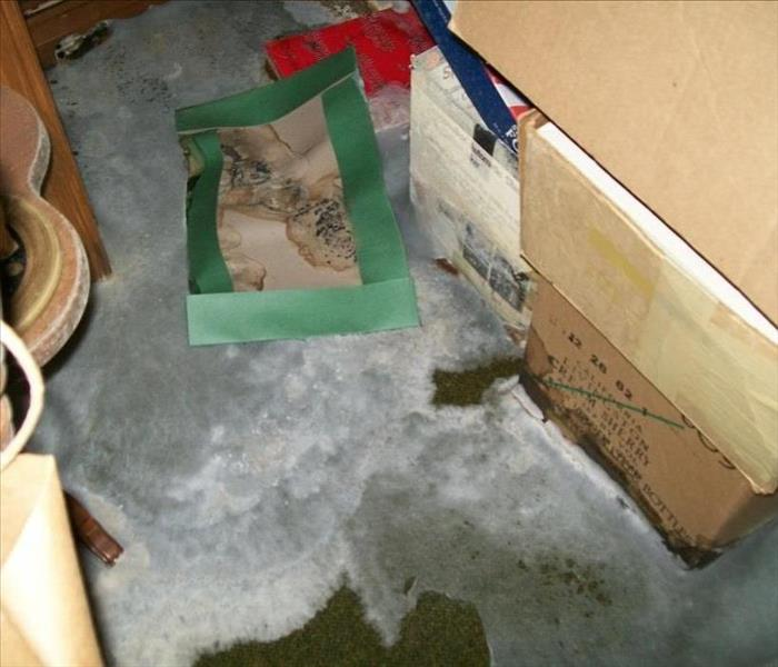 Green carpeting covered with white and grey fuzzy mold. Boxes and furniture show previous water damage and mold growth.