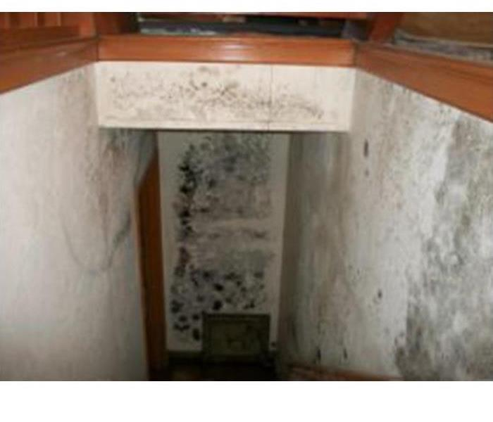 Mold Remediation Mold Damage Prevention