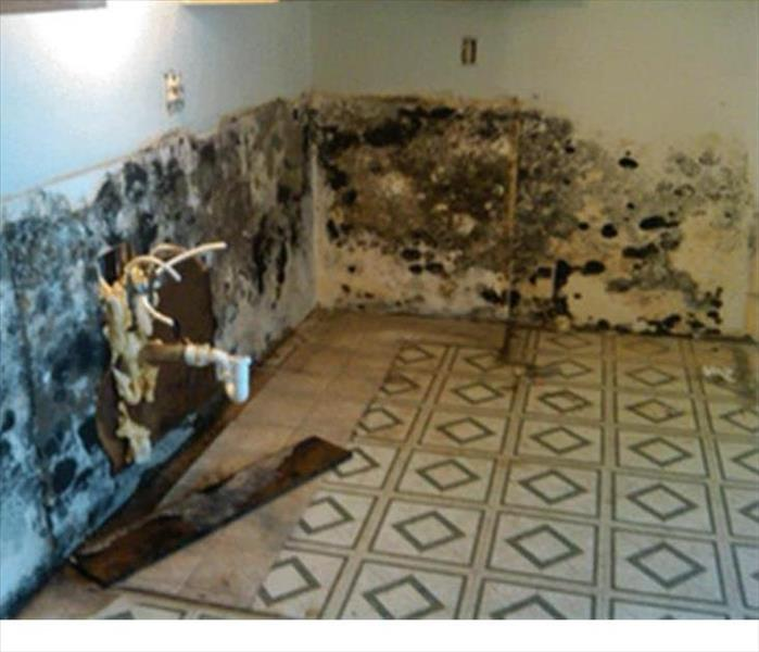Mold Remediation Mold Remediation Services Available Throughout the Mountain Home Area